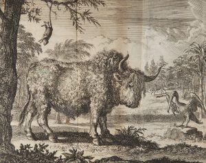 An engraving of a bison and a pelican