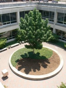 landscaping in ugl courtyard