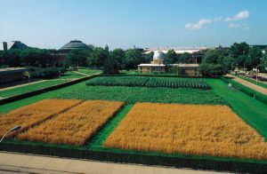 Morrow Plots on the U of I campus.